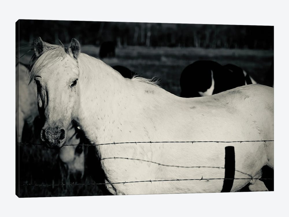 Single Horse In Black And White by Susan Vizvary 1-piece Canvas Wall Art