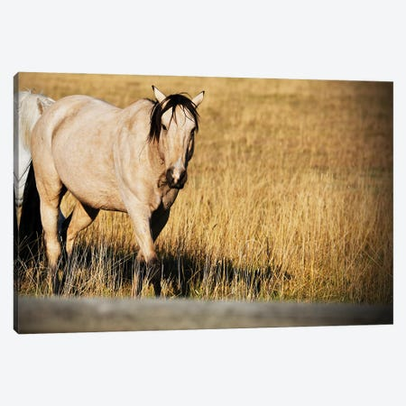 Single Tan Horse Canvas Print #SUV376} by Susan Vizvary Canvas Art