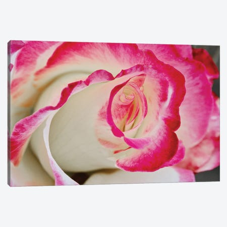 Swirled Rose Close Up Canvas Print #SUV377} by Susan Vizvary Canvas Wall Art