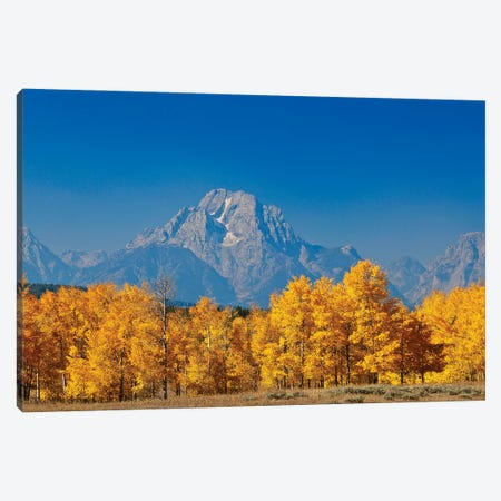 Tetons Yellow Autumn Canvas Print #SUV378} by Susan Vizvary Canvas Print