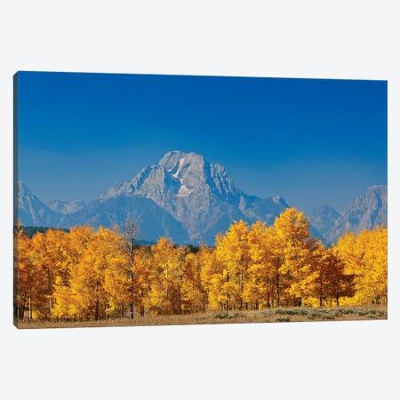 Tetons Yellow Autumn Canvas Print #SUV378} by Susan Vizvary Canvas Print