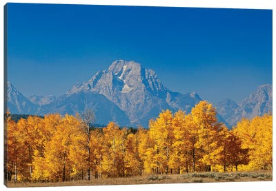 Tetons Yellow Autumn Canvas Art Print