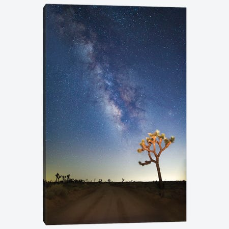 Joshua Tree Milky Way Canvas Print #SUV46} by Susan Vizvary Art Print