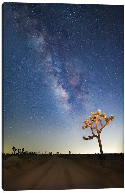 Joshua Tree Milky Way Canvas Art Print