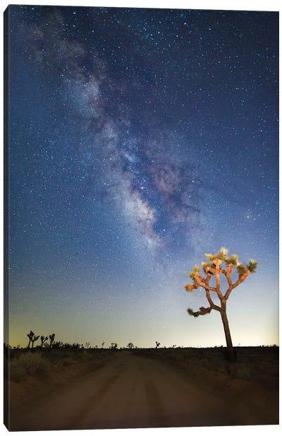 Joshua Tree Milky Way Canvas Art Print