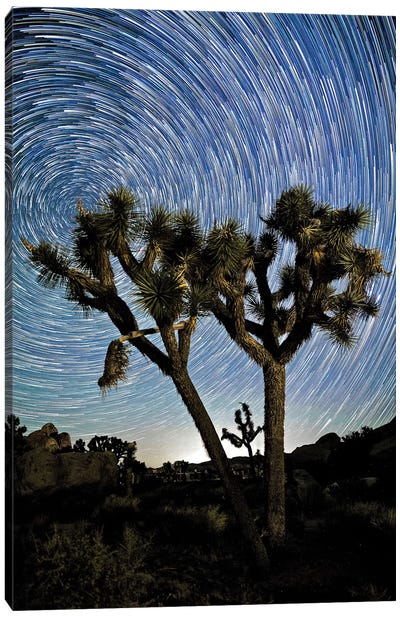 Joshua Tree Star Trails Canvas Art Print