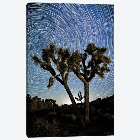 Joshua Tree Star Trails 3-Piece Canvas #SUV48} by Susan Vizvary Canvas Art
