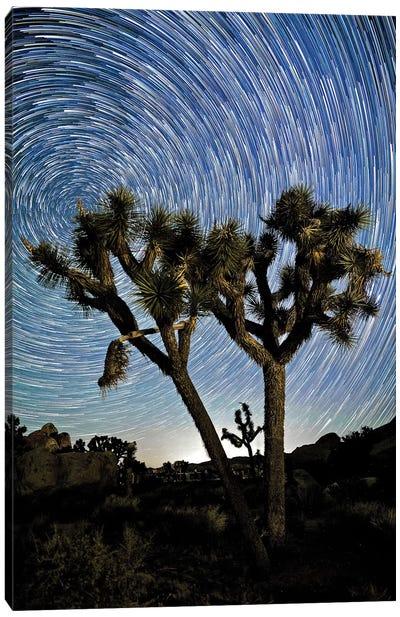Joshua Tree Star Trails Canvas Art Print
