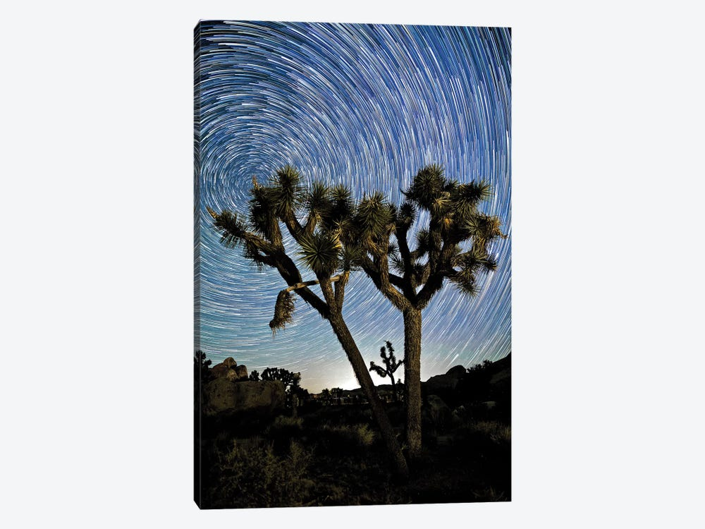Joshua Tree Star Trails 1-piece Canvas Art Print