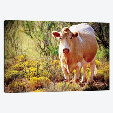 Lone Cow, New Mexico Canvas Print #SUV53} by Susan Vizvary Art Print