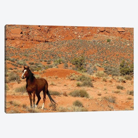 Lone Horse Utah Canvas Print #SUV54} by Susan Vizvary Canvas Art