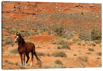 Lone Horse Utah Canvas Art Print