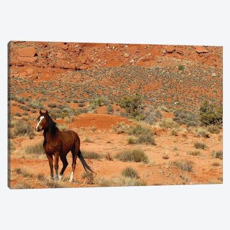 Lone Horse Utah Canvas Print #SUV54} by Susan Vizvary Canvas Art