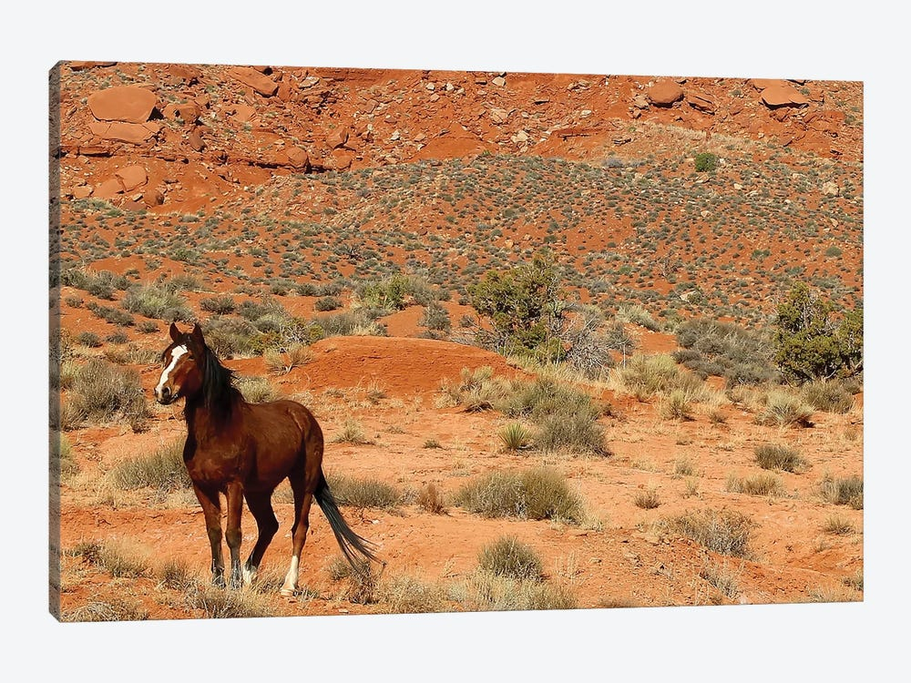 Lone Horse Utah by Susan Vizvary 1-piece Canvas Artwork