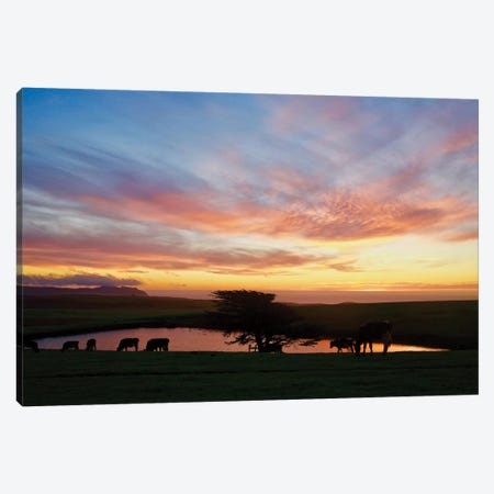 Marin Sunset With Cows Canvas Print #SUV59} by Susan Vizvary Canvas Print