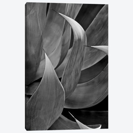 Pasadena Three Leaf Succulant Canvas Print #SUV74} by Susan Vizvary Canvas Artwork