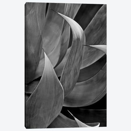 Pasadena Three Leaf Succulant Canvas Print #SUV74} by Susan Vizvary Canvas Artwork