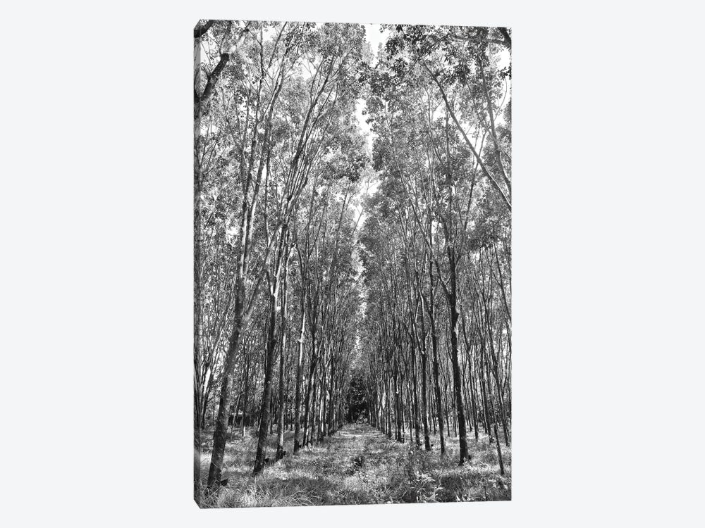 Rubber Trees in Black&White by Susan Vizvary 1-piece Canvas Print