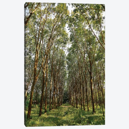 Rubber Trees in Color Canvas Print #SUV85} by Susan Vizvary Art Print