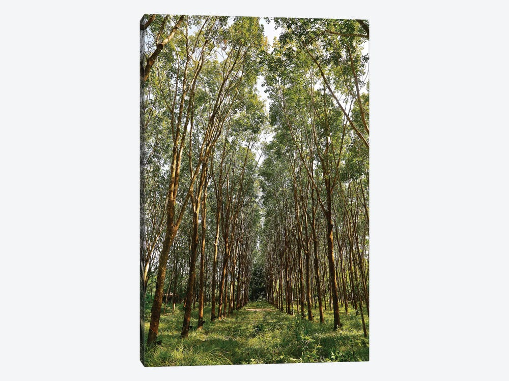 Rubber Trees in Color by Susan Vizvary 1-piece Canvas Artwork