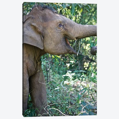 Thai Baby Elephant Canvas Print #SUV98} by Susan Vizvary Canvas Art Print
