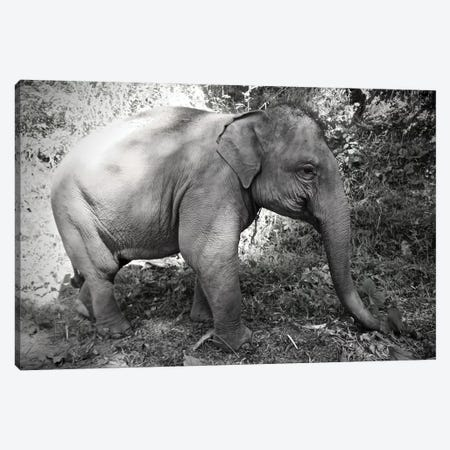 Thai Baby Elephant in Black&White Canvas Print #SUV99} by Susan Vizvary Canvas Art Print
