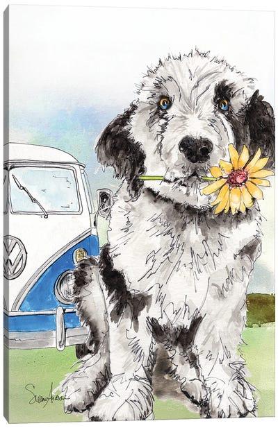 Sheepadoodle Daisy Canvas Art Print