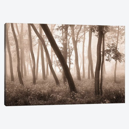 Reticent Woods Canvas Print #SVI7} by Igor Svibilsky Canvas Art