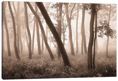 Reticent Woods Canvas Art Print