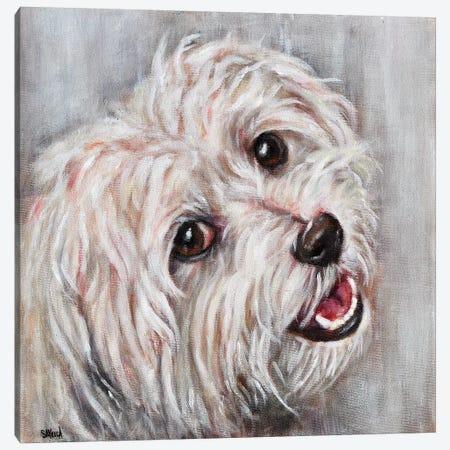 Rex Canvas Print #SVL16} by Christine Savella Canvas Art