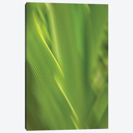Blurred Leaf, Kauai, Hawaii, USA Canvas Print #SVN11} by Savanah Plank Canvas Print