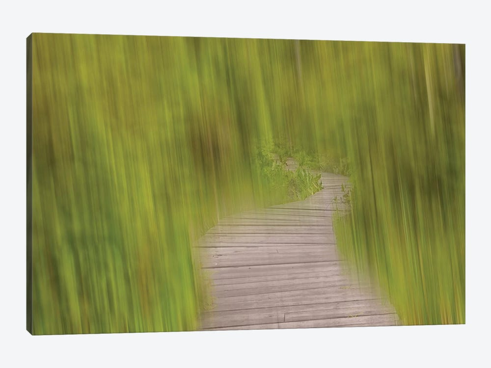 Blurred Path by Savanah Plank 1-piece Canvas Art