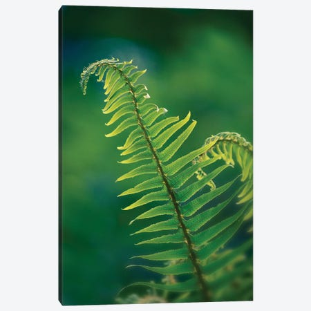Garden Fern Canvas Print #SVN28} by Savanah Plank Canvas Art