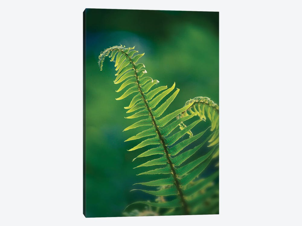 Garden Fern 1-piece Canvas Print