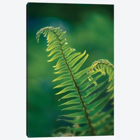 Garden Fern Canvas Print #SVN28} by Savanah Plank Canvas Art