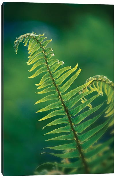 Garden Fern Canvas Art Print