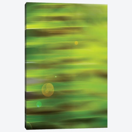 Abstract Green Flora With Lens Flare Canvas Print #SVN2} by Savanah Plank Canvas Artwork