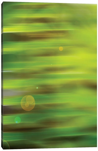 Abstract Green Flora With Lens Flare Canvas Art Print