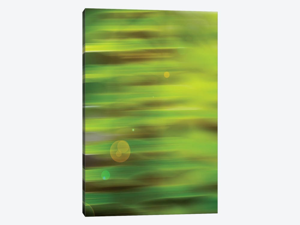 Abstract Green Flora With Lens Flare by Savanah Plank 1-piece Canvas Wall Art