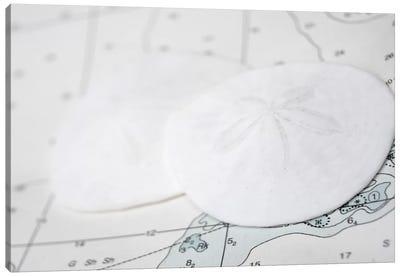 Nautical Sand Dollars Canvas Art Print