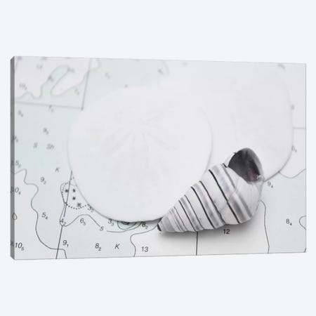 Nautical Shell And Sand Dollar Canvas Print #SVN37} by Savanah Plank Canvas Art