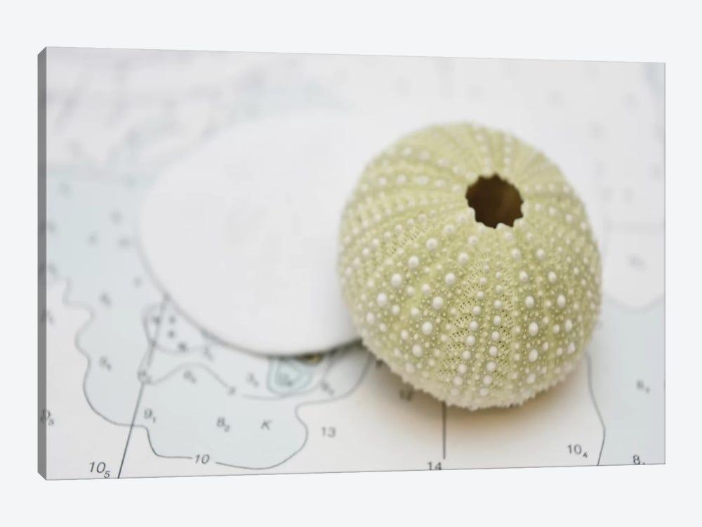 Nautical Urchin by Savanah Plank 1-piece Canvas Wall Art