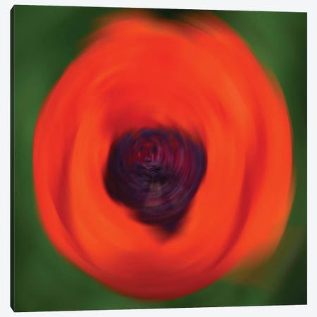 Orange Poppy In Motion 3-Piece Canvas #SVN41} by Savanah Plank Canvas Art