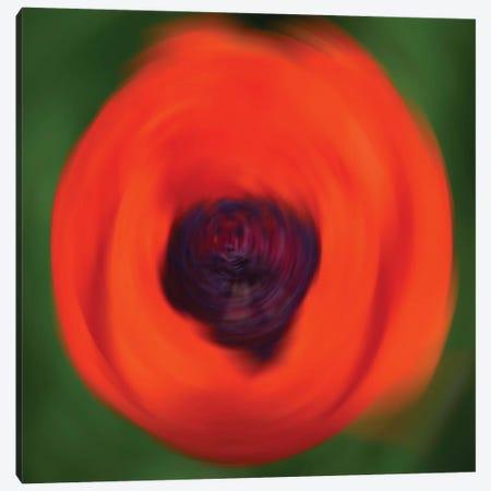 Orange Poppy In Motion Canvas Print #SVN41} by Savanah Plank Canvas Art