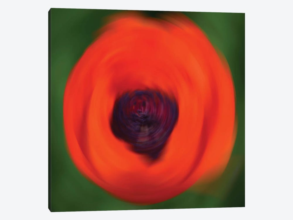 Orange Poppy In Motion by Savanah Plank 1-piece Canvas Artwork
