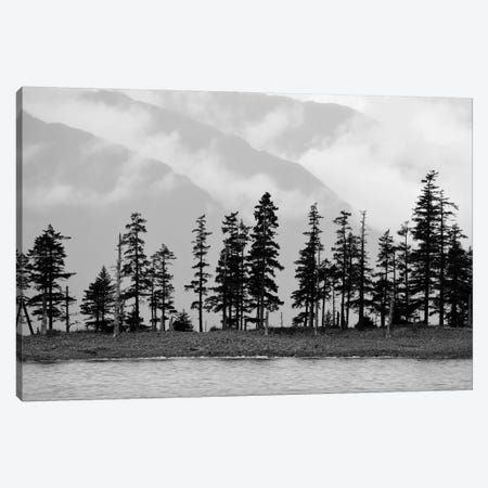 Pines On Beachfront Canvas Print #SVN42} by Savanah Plank Canvas Wall Art