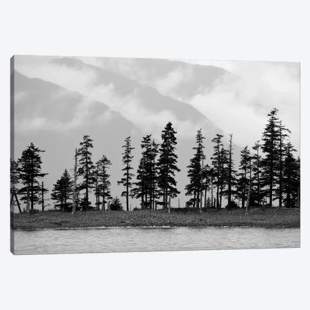 Pines On Beachfront Canvas Print #SVN42} by Savanah Plank Canvas Wall Art