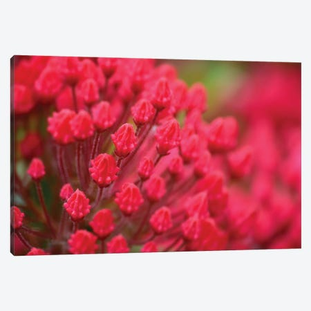 Pink Flowers Canvas Print #SVN45} by Savanah Plank Canvas Art Print