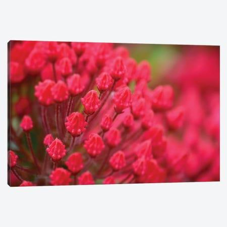 Pink Flowers Canvas Print #SVN45} by Savanah Plank Canvas Art Print