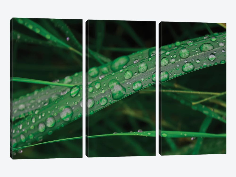 Rain Drop Beach Grass by Savanah Plank 3-piece Canvas Art Print